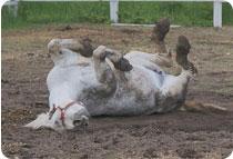 horse_mud